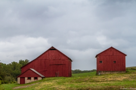 red barn collective