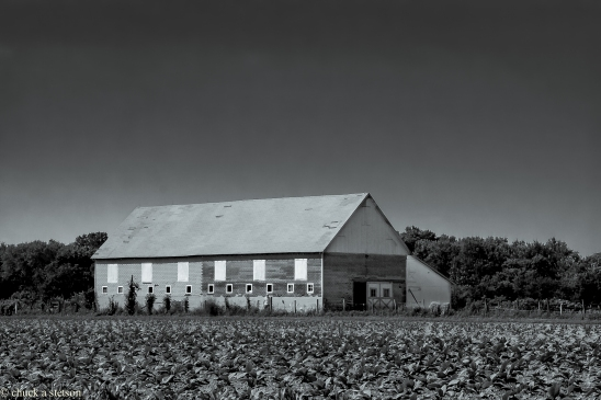 monochrome acres